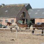 Foto paarden om paddocks