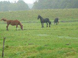 Foto paarden gedurende weidegang